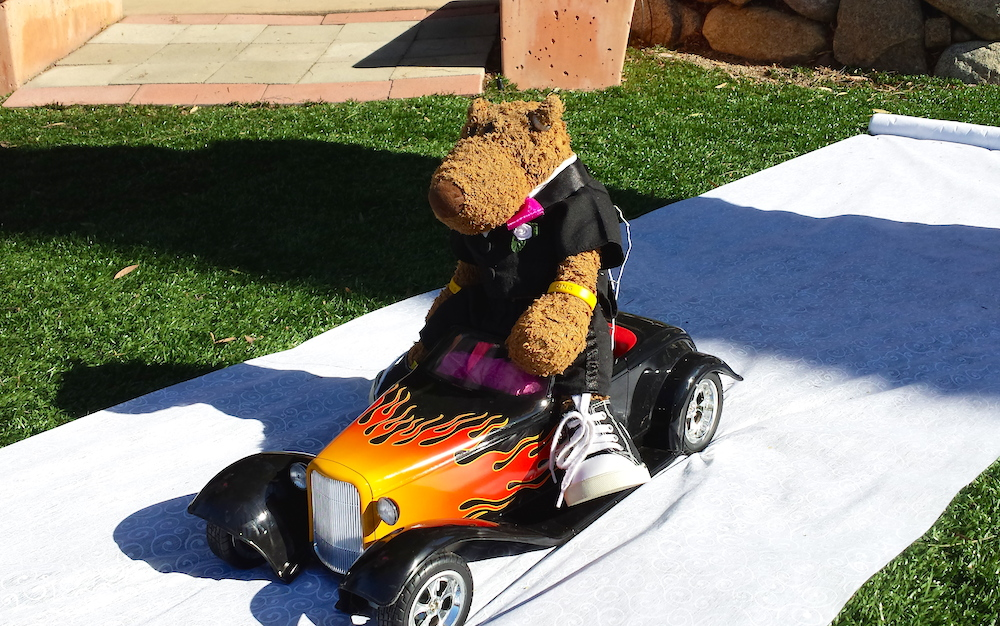 The Ring Bear for a San Diego wedding